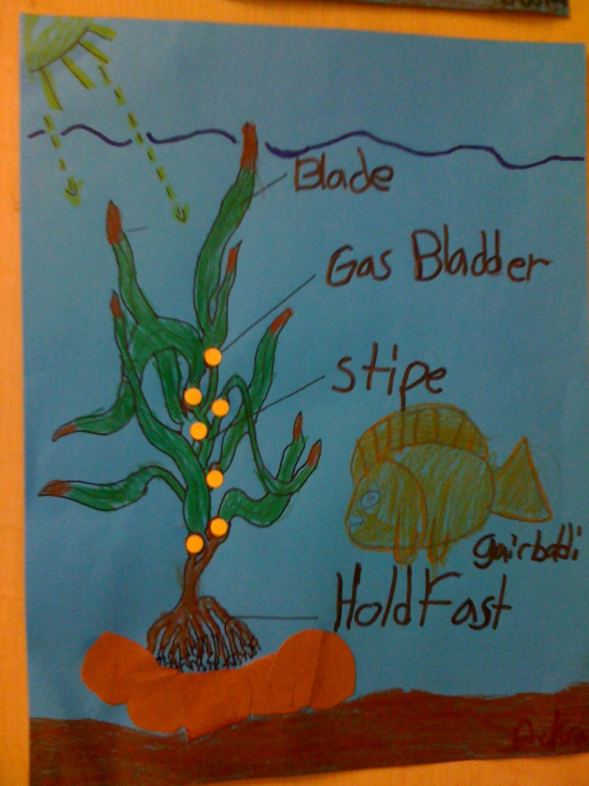 Kelp Forest Diagram Three Circle Venn Print Bishop 39s Blackboard An Elementary Education Blog
