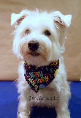 Yappy Birthday Bandana Collar Slipcover