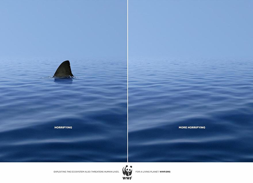 WWF,Shark
