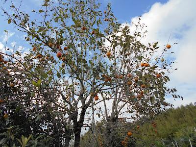 渋柿と秋の空2