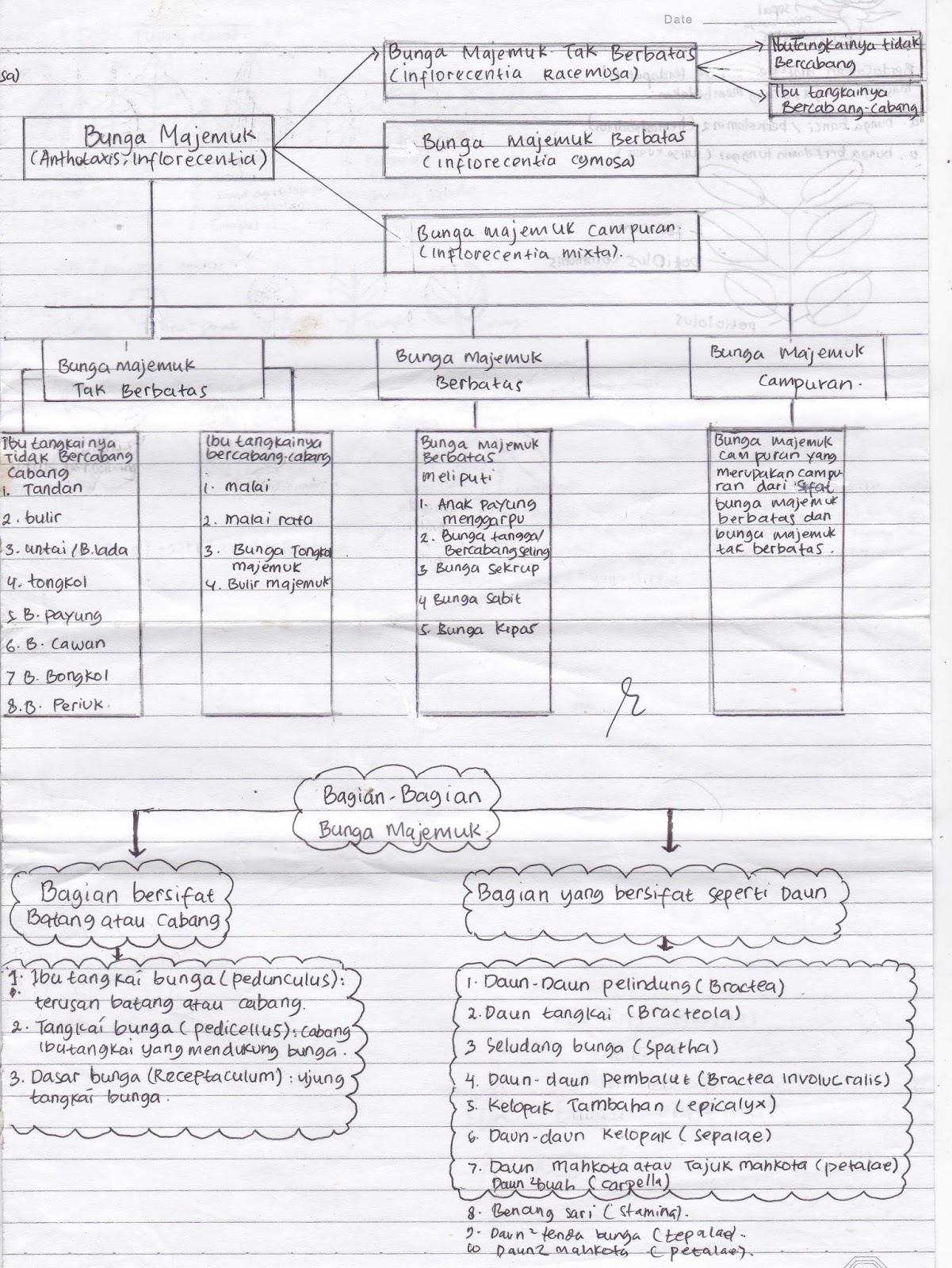 Biologi green areabiologi gambar diagram dan skema bunga majemuk gambar 11 diagram pembagian bunga majemuk sumber ade sm ccuart Images