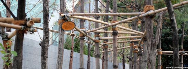 Árboles coreanos sujetos con varas