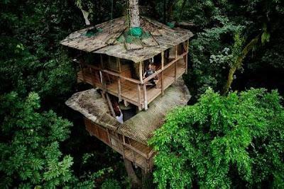 منازل فوق الاشجار فى كوستاريكا