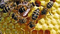 Bee Keeping Training