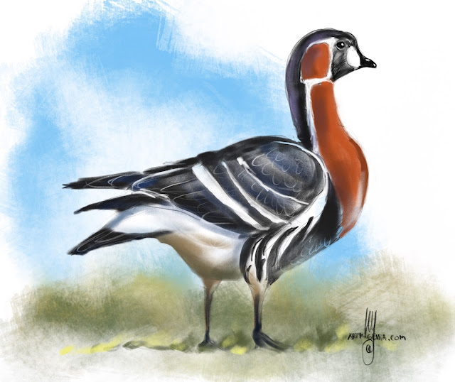 Red-breasted goose Bird painting by Artmagenta