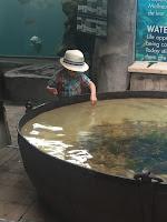 La ferme aux crocodiles, bassin sensoriel