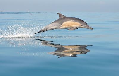 Excursiones con pesca turismo para avistar el delfín común