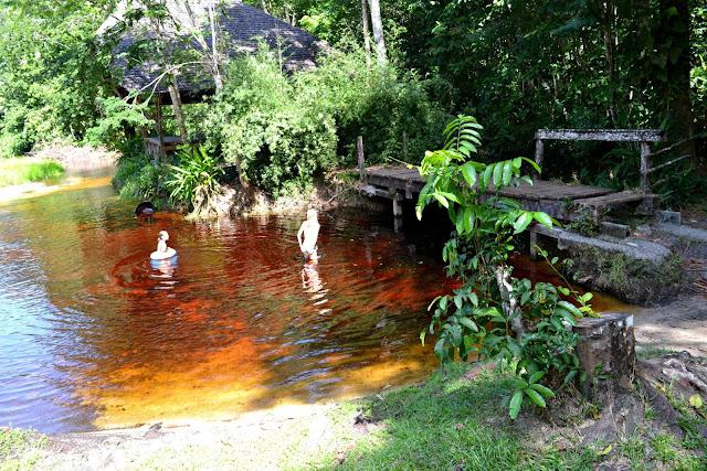 Guyane, crique morpio, se baigner, Nationale 1