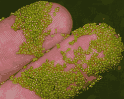 Manfaat Tumbuhan Angiospermae