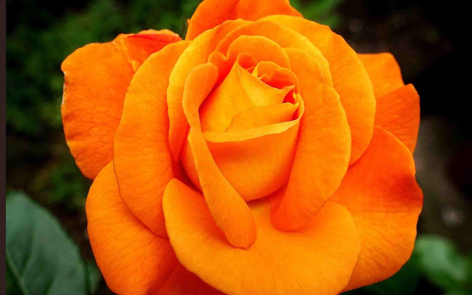 flowers images for whatsapp