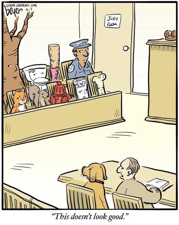 Image result for jury cartoon