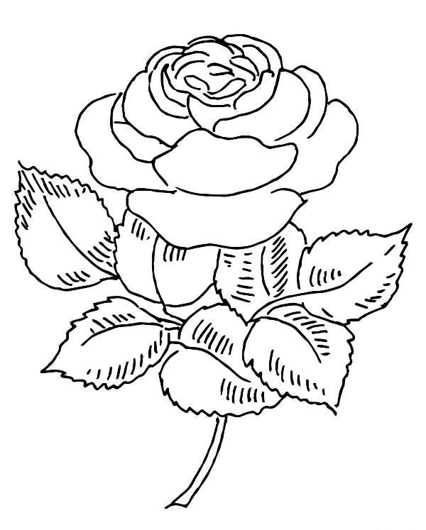 15 Gambar Mewarnai Bunga Mawar Untuk Anak PAUD dan TK | Aneka ...