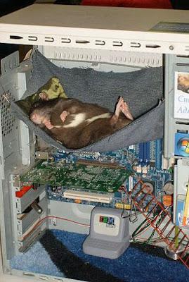 Baby mit Computer beruhigen