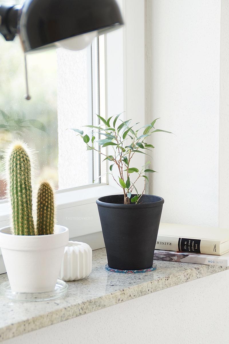 DIY: Birkenfeige/ Ficus Natasja aus Zweig ziehen als pflegeleichte Zimmerpflanze