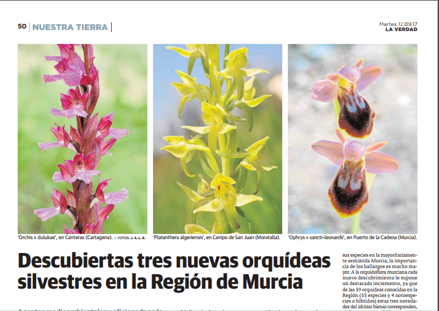 Libro Orquideas Orquídeas Blog De Angel Mar Enero 2018