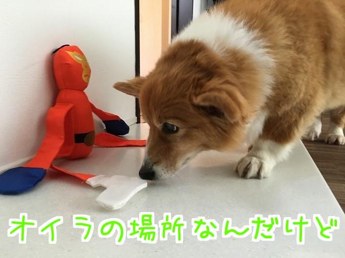 オレンジレンジャーと風太06