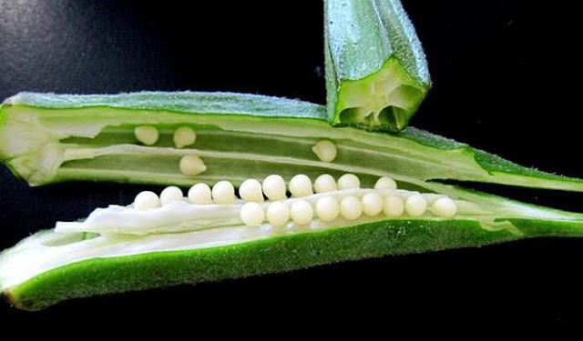 Image result for भिंडी बहुत ही पौष्टिक सब्जी