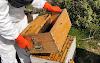 Πως σηκώνουμε πάτωμα σε δεκάρι μελίσσι. Ένα ακόμη βίντεο απο τον επαγγελματία μελισσοκόμο Πέτρο Ηλιάδη...