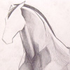 Sketch of a horse