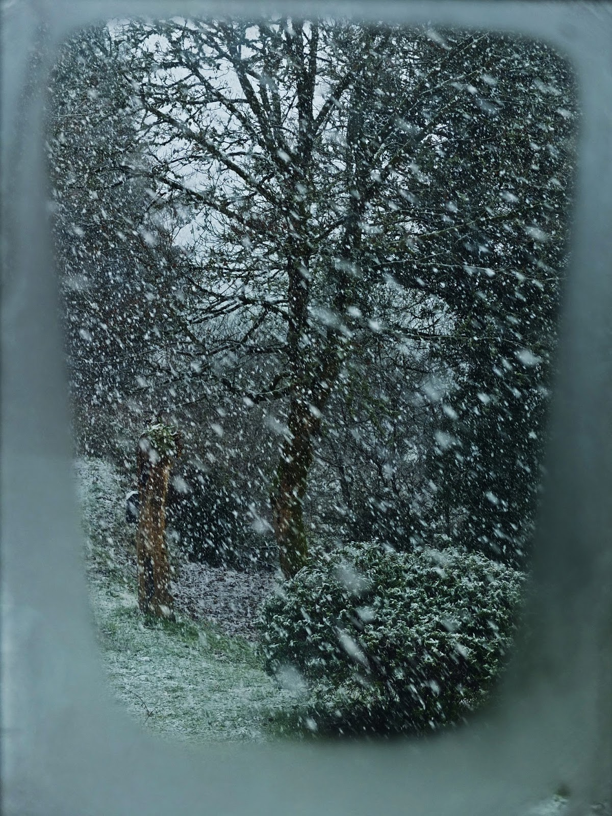 Photo taken through a window overlooking a maple tree in a blizzard.