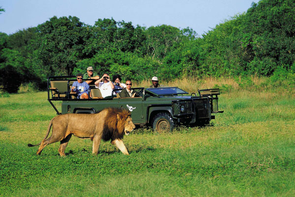 South Africa Safari 3