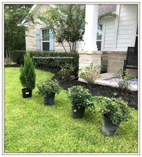 Flower Beds-Curb Appeal-Landscape-DIY-Gardening-Hawthorns-Cypress-From My Front Porch To Yours