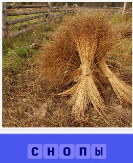 на небольшом поле собраны в снопы зерновые культуры