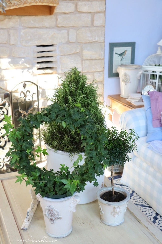 Winter living room myrtle topiaries, ivy wreaths, rosemary trees  to brighten homes after Christmas