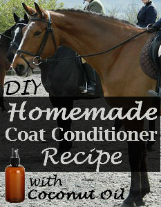 Homemade Coat Conditioner With Coconut Oil Savvy Horsewoman