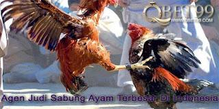 Agen Judi Sabung Ayam Terbesar Di Indonesia
