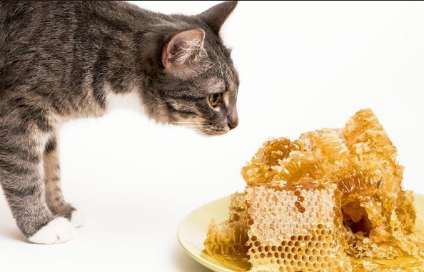 Παραπλάνηση; Παραπληροφόρηση; Παρανόηση;: Του Δάσκαλου Μελισσοκομίας Γιώργου Κοτζιά