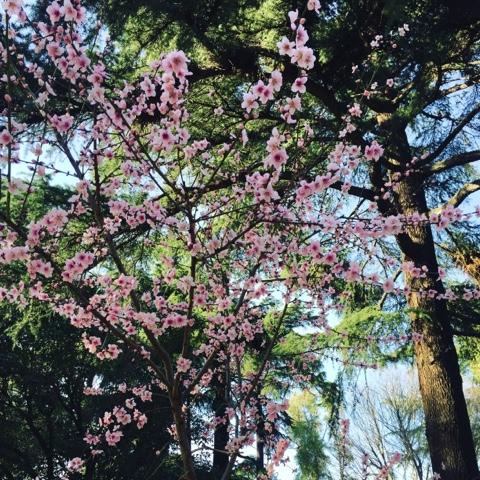 l'origine della primavera secondo il mito