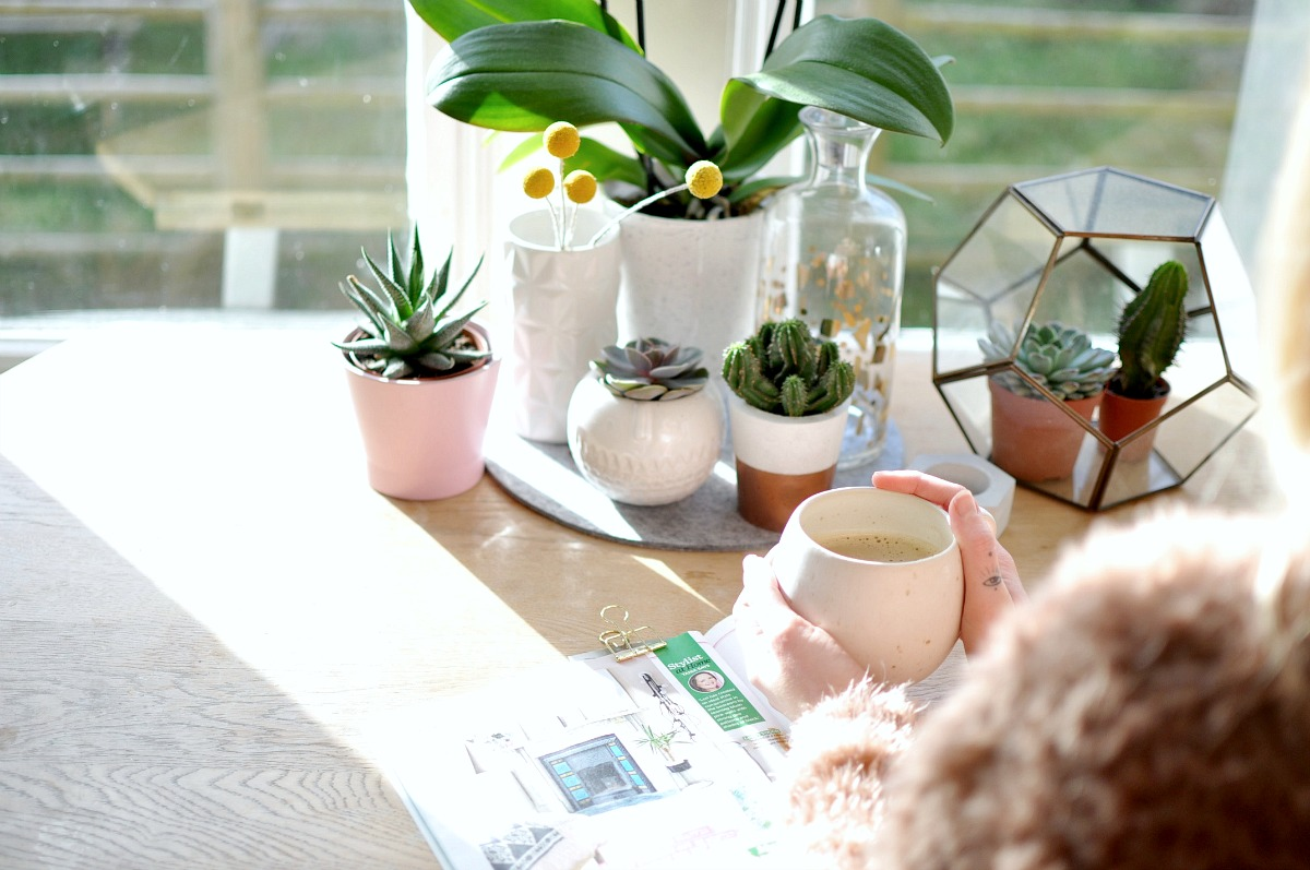 orchid care, orchid plant care, phalaenopsis, how to care for orchids, how to grow orchids, looking after orchids, plant gang, interior styling, spring, blooms, flowers, indoor garden