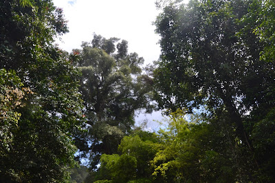 Vegetasi hutan di tepi sungai