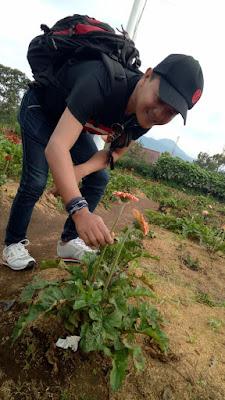 menjajal serunya petik bunga sendiri di taman bunga celosia