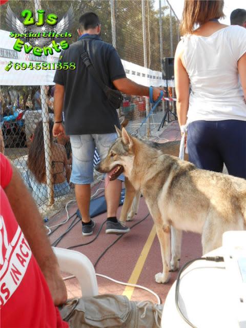 ΕΚΘΕΣΗ ΜΟΡΦΟΛΟΓΙΑΣ ΣΚΥΛΩΝ ΣΥΡΟΣ DJ SYROS2JS EVENTS