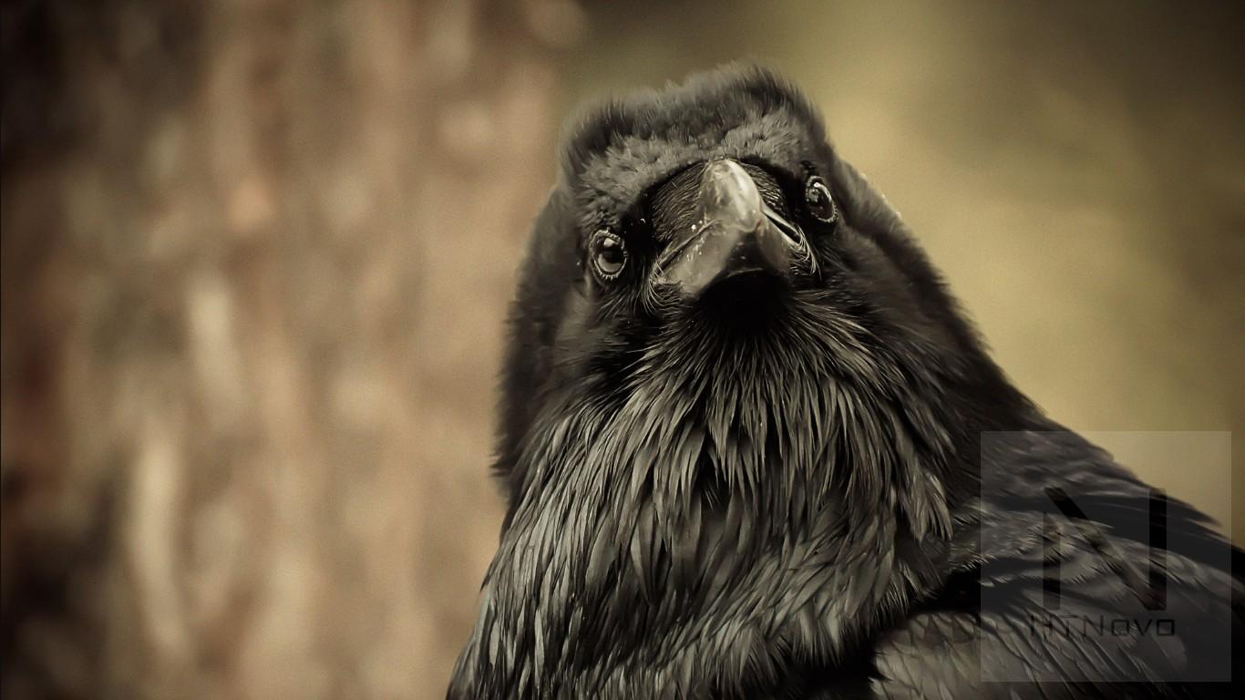 Call-of-the-raven-tema-windows-10