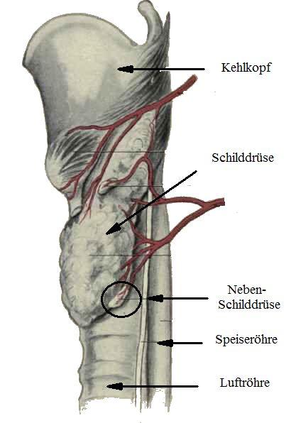 Osteoporose - Handeln bevor der Knochen bricht: Osteoporose durch ...