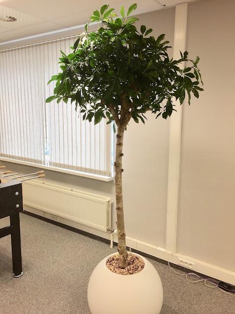 plantenverhuur bedrijven Antwerpen Brussel Limburg Vlaams-brabant Hasselt