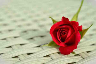 Hindi story of a flower rose