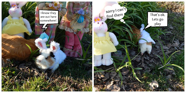 #Cinnamon lost the #Easter baskets. CarmaPoodale.com