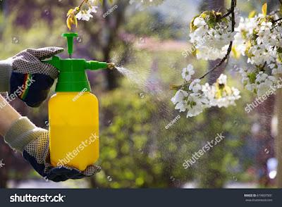 4 Cara Membuat Pestisida Alami Untuk Bermacam Hama Tanaman