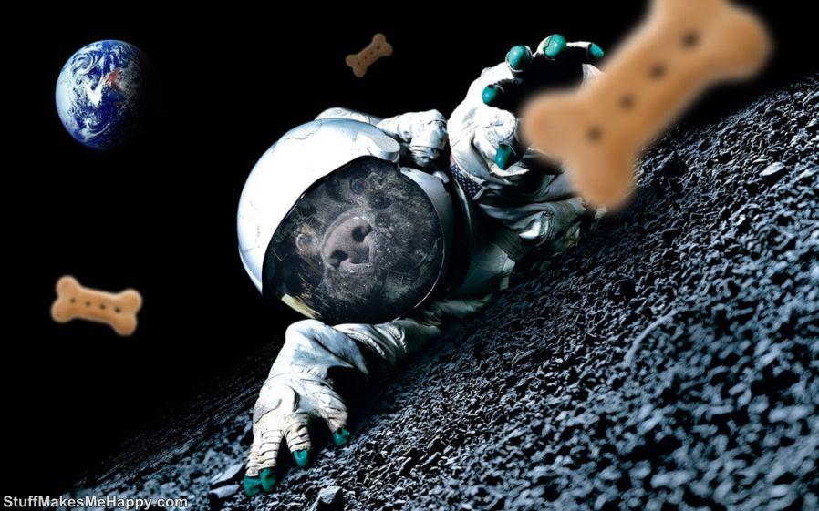12. Astronaut