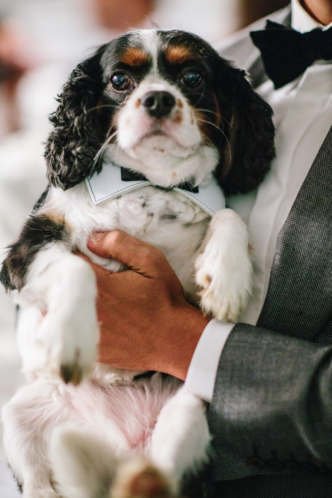 Adorable dog wearing a bow tie photo by STUDIO 1208