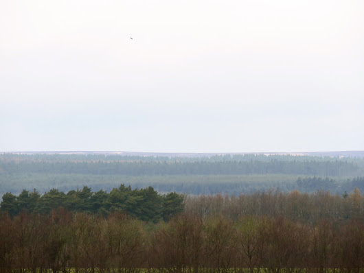 Wykeham Raptor Viewpoint