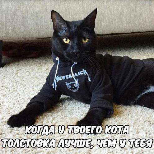 Кот в толстовке