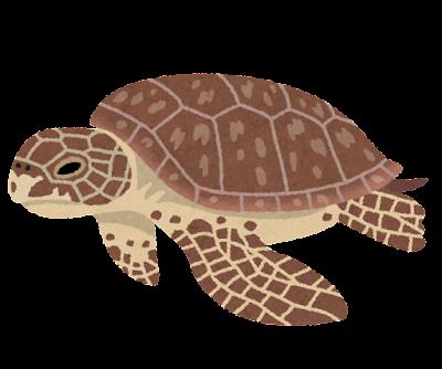 アオウミガメのイラスト(亀)