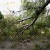 35 κοπές δέντρων διάσπαρτα στον νομό Αττικής