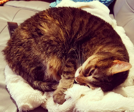 image of Sophie the Torbie Cat curled into a ball