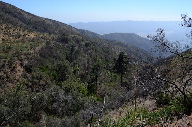 trees in an unburned crevas